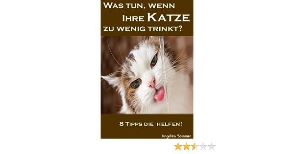 Was Tun Wenn Ihre Katze Zu Wenig Trinkt 8 Tipps Die Helfen