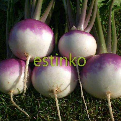 50pcs / peau pourpre du lot Radis Graines Jardin Violet Cerise de Bell Radis Mini Radis jardin Bonsai Semences potagères Plante en pot