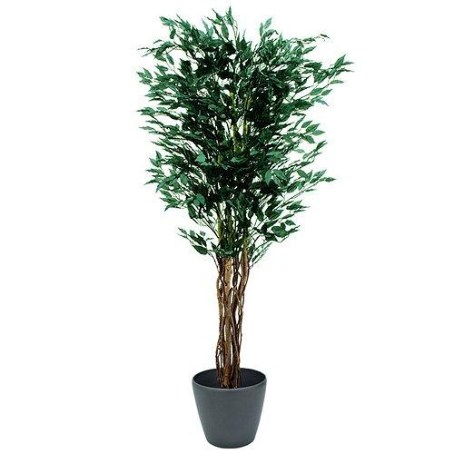 Euro Palms 82506126 Ficus-Benjamini Multi-Stamm, 180 cm
