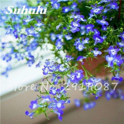 50 Pcs chaud haute neige rouge Graines de fleurs, et la cour Perennial Little Garden Bubble décoratif Sac * Le meilleur Bonsai Accueil Regarder 2
