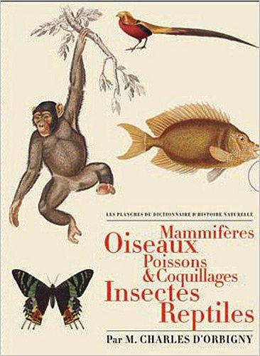 Les Planches du Dictionnaire d'Histoire Naturelle : Coffret 5 volumes : Mammifères ; Oiseaux ; Poissons & coquillages ; Insectes ; Reptiles par Charles d' Orbigny