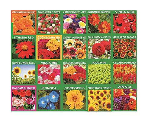 Moira 20 Flower Seeds Pack (4200+seeds)