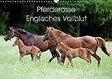 Pferderasse Englisches Vollblut (Wandkalender 2018 DIN A3 quer): Aufnahmen von der eleganten Pferderasse Englisches Vollblut (Monatskalender, 14 ... [Kalender] [Apr 01, 2017] Wittek, Ronald