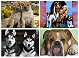 Set 4 Tovagliette Cani