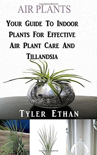 air-plants-your-guide-to-indoor-plants-for-effective-air-plant-care-and-tillandsia