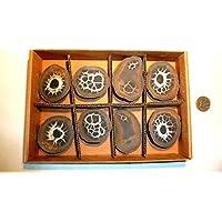 Septarie, Geode, Septarien-Paare, Sammlung 8 Stück, ca. 450g, mit wunderschönen Strukturen. preisvergleich bei billige-tabletten.eu