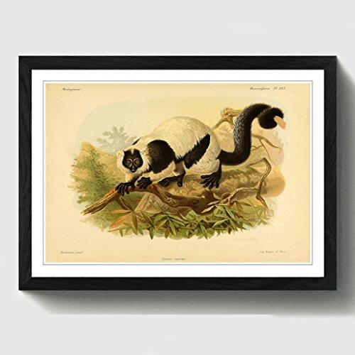 BIG Box Art Vintage Funktion Keulemans schwarz & weiß VARIS Schwarz Gerahmter Druck, Mehrfarbig, 24,5x 18/62x 45cm/a2-p, Holz, schwarz, 24.5 x 18-Inch/62 x 45 cm/A2