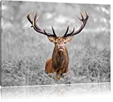 Großer Hirsch im Feld B&W Detail, Format: 120x80 auf Leinwand, XXL riesige Bilder fertig gerahmt mit Keilrahmen, Kunstdruck auf Wandbild mit Rahmen, günstiger als Gemälde oder Ölbild, kein Poster oder Plakat