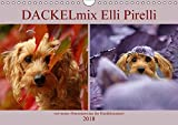 DACKELmix Elli Pirelli (Wandkalender 2018 DIN A4 quer): .mit neuen Abenteuern aus der Hundeknipserei (Monatskalender, 14 Seiten) (CALVENDO Tiere) [Kalender] [Apr 16, 2017] Köntopp, Kathrin