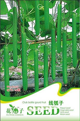 graines de légumes Graines de moutarde sains et nutritifs organiques pour le jardin de la maison, à haut rendement facile à cultiver 100 graines