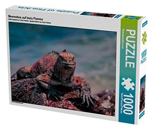 meerechse-auf-insla-florena-1000-teile-puzzle-quer-calvendo-natur
