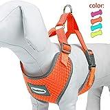[Gesponsert]ThinkPet Atmungsaktives Hundegeschirr aus Weichem Air Mesh Gewebe, reflektierend, XL, Neon-Orange