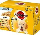 Pedigree Junior Hundefutter in Gelee