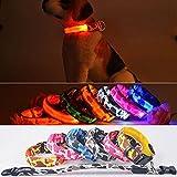 bureze Größe S Pet Hund LED-Halsband Sicherheit Tricks blinkendes Halsband Leine Luminous Fluoreszierend Nylon