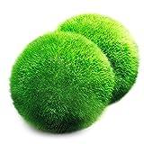 Une boule de mousse Aegagropila linnaei géante (3,8cm à 5,1cm) + une petite...