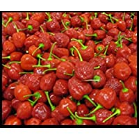 Portal Cool South African dulce Piquante Peppadew Pepper Seed - 50 semillas Pepperdew orgánicos