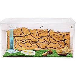 Fourmilière en Sable (Fourmis et Reine GRATUITES) - New Educational Ant Farm - Formicarium for Live Ants