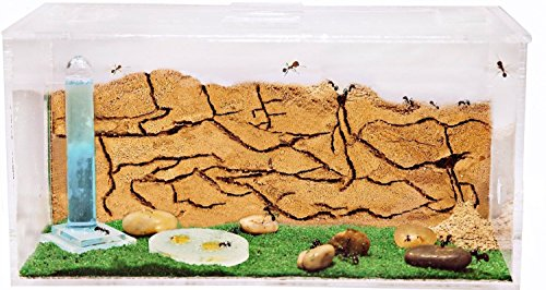 ameisenfarm-starterkit-ameisen-mit-konigin-free-new-educational-ant-farm-formicarium-for-live-ants