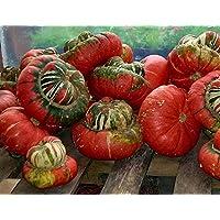 Desconocido Generic Flower Gourd Turban Turban 25 Semillas - Inusual