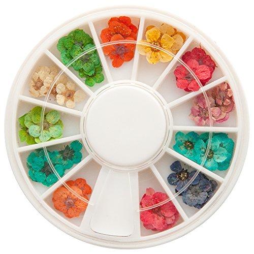 Scopri offerta per NAILFUN ® Fiori secchi per nail art veri fiori essiccati ca. 40 pezzi in 12 colori in confezione circolare girevole