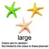 EMVANV - Adorno artificial de resina para acuario con forma de estrella de mar (colores: se envía al azar)