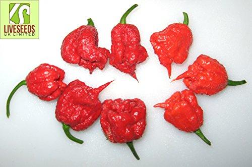 liveseeds-chili-carolina-reaper-pepe-piu-caldo-del-mondo-10-semi
