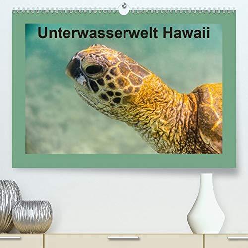 Unterwasserwelt Hawaii(Premium, hochwertiger DIN A2 Wandkalender 2020, Kunstdruck in Hochglanz): Schnorcheln vor Hawaiis Küste (Monatskalender, 14 Seiten ) (CALVENDO Tiere)