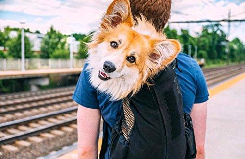 K9 Sport Sack | Dog Carrier Backpack for Small and Medium Pets | Front Facing Adjustable Dog Backpack Carrier | Fully… 7