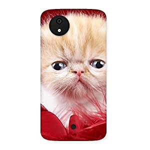 Enticing Kitty In Red Fur Back Case Cover for Micromax Canvas A1