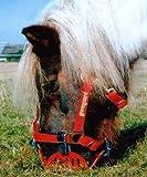 "greenguard Maulkorb ""Fressbremse"" Gr. Pony"