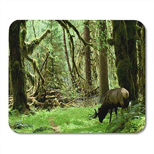Deglogse Gaming-Mauspad-Matte, Green Rainforest Roosevelt Elk in Olympic National Park Washington Mouse Pad, Desktop Computers mats -