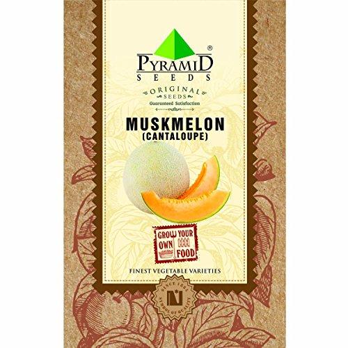 Pyramid Muskmelon or Cantaloupe Seeds (4g, Green)
