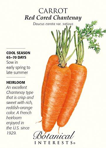 Chantenay à cœur rouge carotte graines - 1 gramme