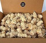 BBQKontor 5kg Premium Anzünder aus Holzwolle & Wachs - Grillanzünder Kaminanzünder Ofenanzünder Brennholzanzünder Kaminholzanzünder Holzanzünder Anzündkamin Grill Grillkohle Holzkohle Briketts