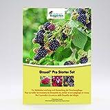 Andermatt Biogarten AG Drosal® Pro Kirschessigfliegen-Falle