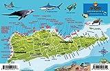 St. Croix USVI Dive Map Fish ID Virgin Islands Waterproof Fish Card Franko Maps -