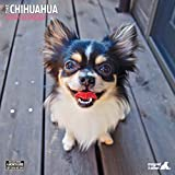 Magnet & Stahl 22.753,3 cm Chihuahua Traditioneller'2019 Kalender