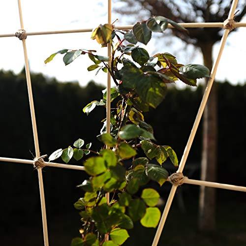 ORANGE DEAL 100 x Pflanzenstüze Tomatenstangen Rankgitter aus Holz Pflanzstab Rankstab 90 cm aus Bambus Ø 6 mm inkl. 40 Pflanzenbinder und 30m Bindfaden - 8