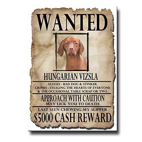 Hungarian Vizsla Wanted Fridge Magnet