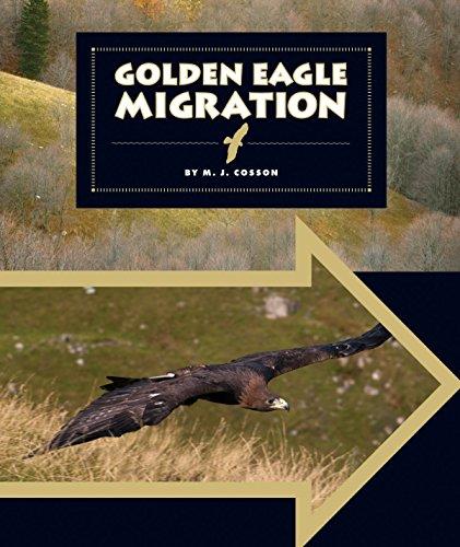 Golden Eagle Migration (Animal Migrations)