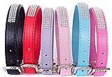 Lushpetz Strass Hundehalsband mit frei graduierten Hund oder Knochen Charme in 6 Farben erhältlich: Schwarz, Rot, Blau, Lila und Pink (XS, Schwarz)