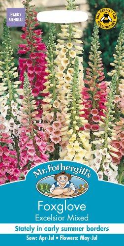 Unbeheizte Schale (Mr Fothergills Pilzsporen, Blume Fingerhut Excelsior gemischt 2500 Samen)