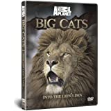 BIG CATS: Into The Lion's Den
