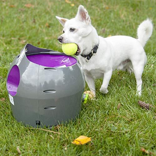 urfmaschine für Hunde, automatisches Ball-Wurfgerät ()