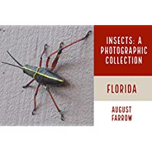 Insects & Arachnids: A Photographic Collection:  Florida: United States (English Edition)