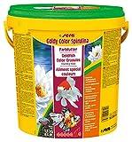 sera 00884 goldy color spirulina 3,8 kg (10 l) - Das farbverstärkende Spezialgranulat für Goldfische und andere Kaltwasserfische