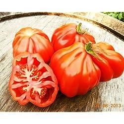 """100 Samen Tomate """"Coeur de Boeuf"""" Ochsenherztomate"""