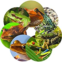 Frogs Reward Stickers, Teachers, Parents, Kids