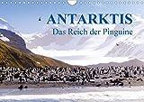 Antarktis - Das Reich der Pinguine CH-Version (Wandkalender 2020 DIN A4 quer): Antarktis - Lebensraum der Pinguine - Ein Blickfang im Büro und zu Hause (Monatskalender, 14 Seiten ) (CALVENDO Natur) - Max Steinwald
