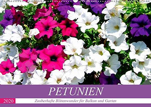 Petunien. Zauberhafte Blütenwunder für Balkon und Garten (Wandkalender 2020 DIN A2 quer)